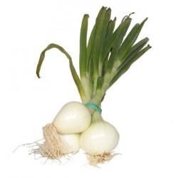 Cebolla Tierna (Manojo 3-4 Unidades)